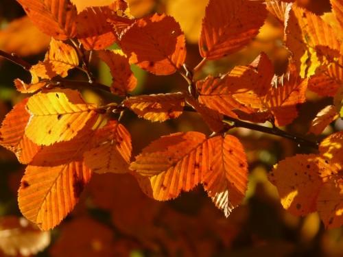 가을이 되면 보통은 낙엽과 단풍을 생각하지만 과학기자가 가장 먼저 떠올리는 것은 노벨상이다.  - pixabay(Hans) 제공